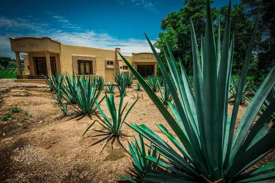 Quatre villes magiques à visiter au Mexique